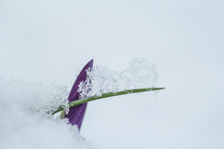 neige-42
