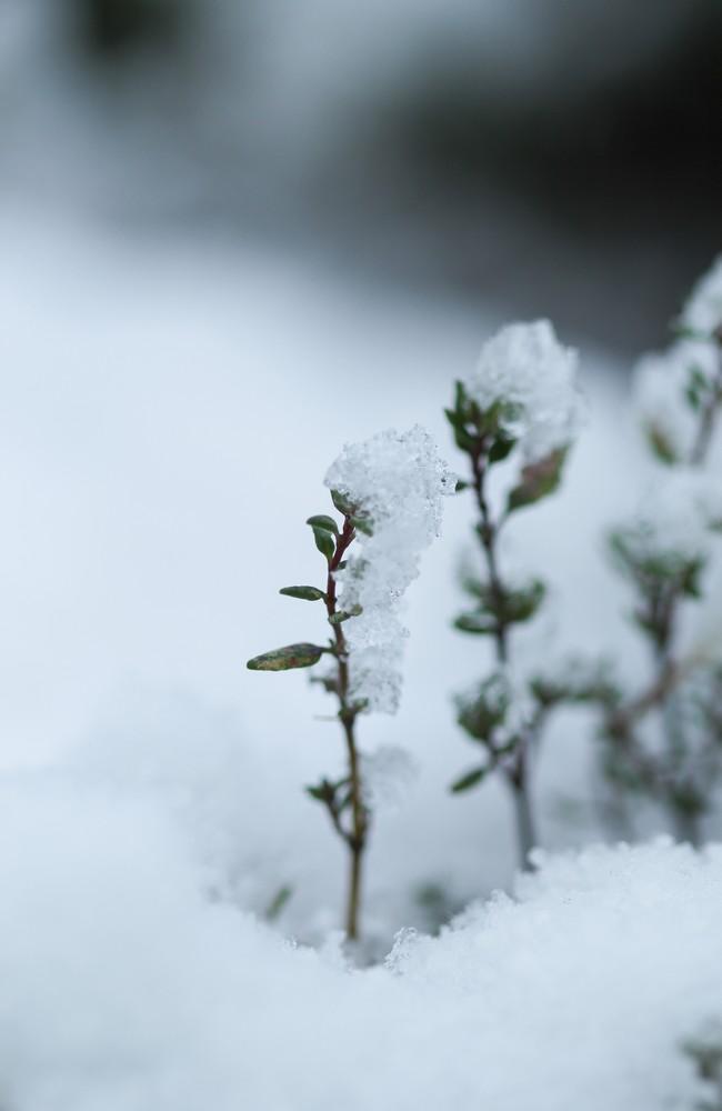 neige-52