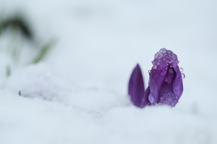 neige-56