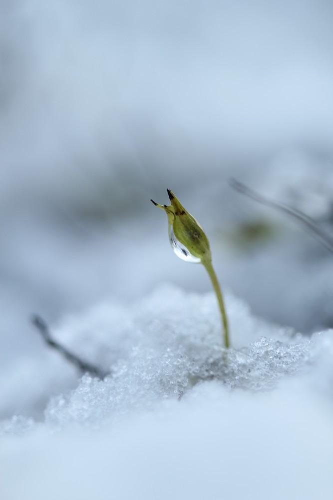 neige-92