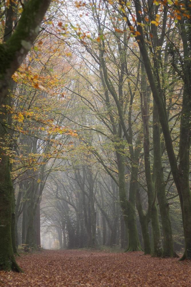 kergue automne-44